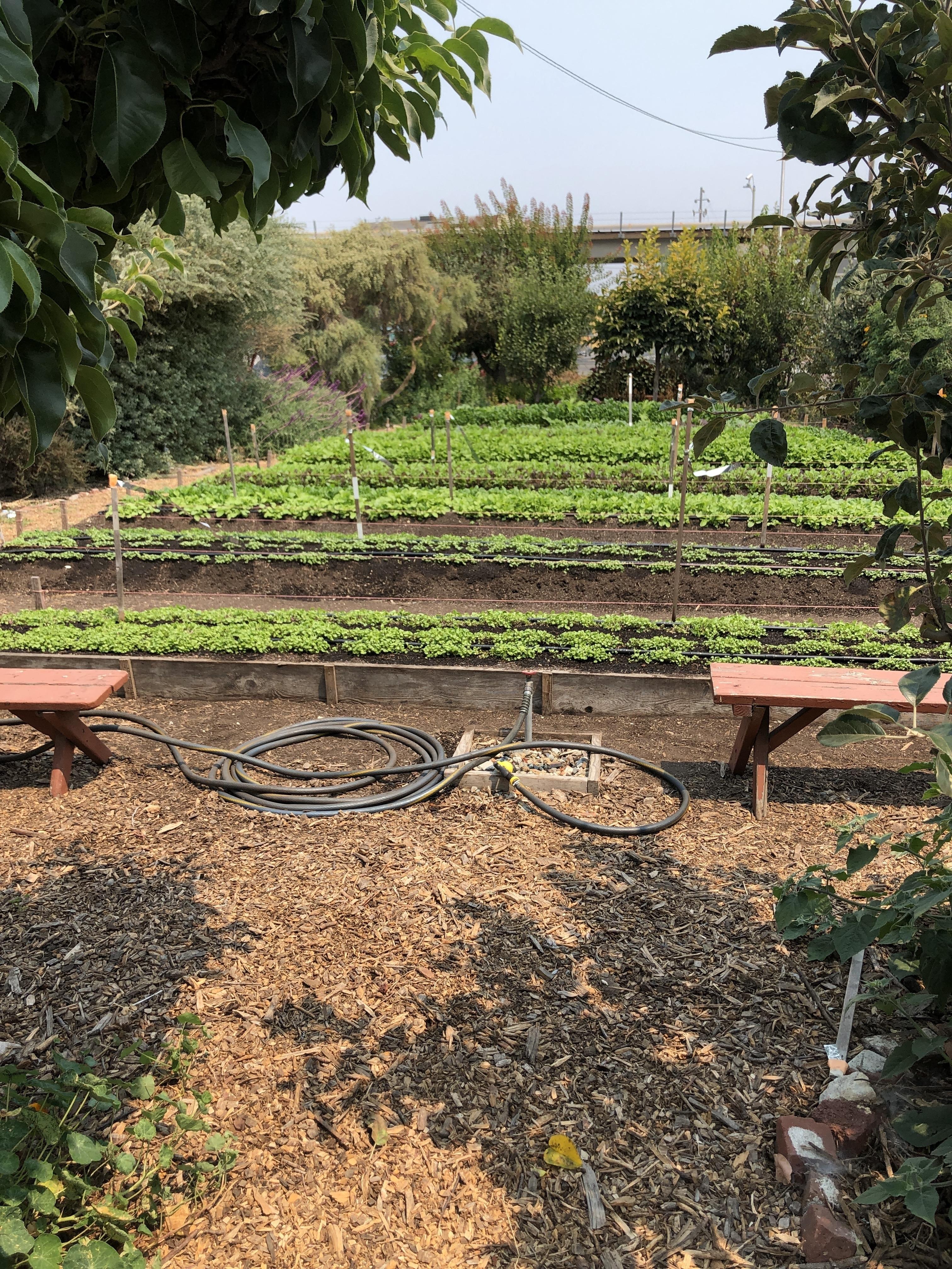 WOW Farm is Now a Project of Acta Non Verba! - Acta Non Verba